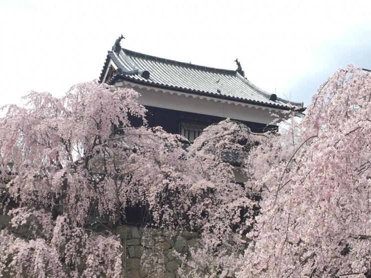 桜パッチワーク
