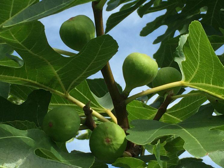 ラズベリーGrapes fig 中沢フェリーサNakazawa Felisa Patchwork Quilt パッチワークミシンキルト